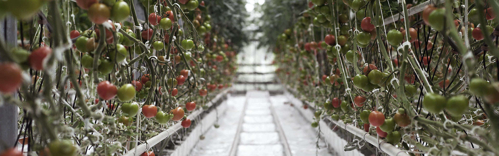 Gemüseanbau maschinen | Steenks Service