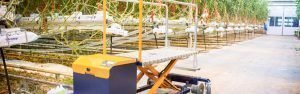 Bladplukwagens voor het plukken en snijden van (tomaten)blad op gewenste hoogte | Steenks Service